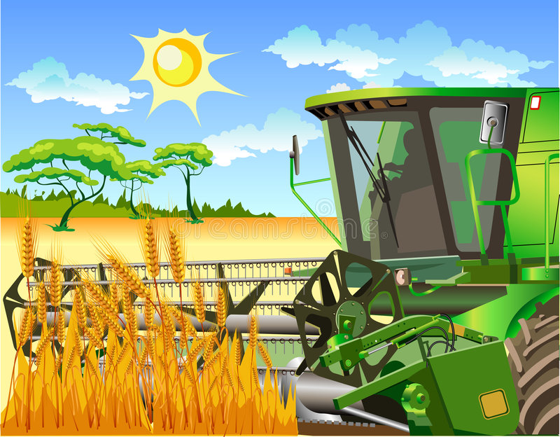 Field of wheat and combine. Ripe yellow wheat ears on a floor, agricultural machinery, combine vector illustration