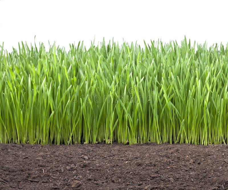 Field Wheat Grass Soil