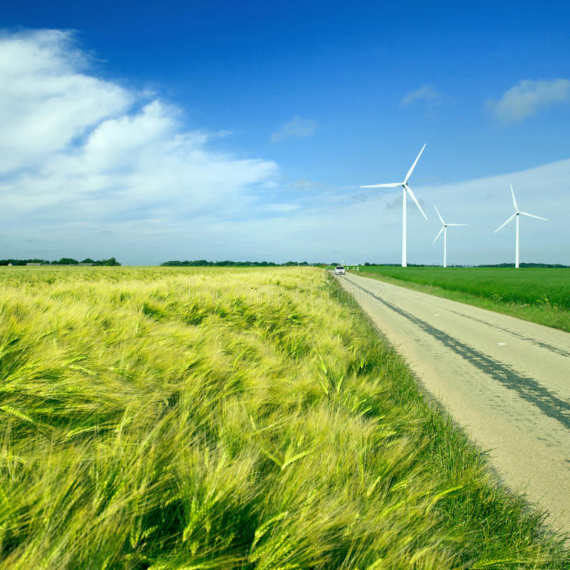 The field of wheat and rural road. In north France, Normandy royalty free stock images