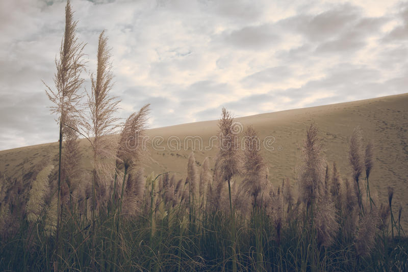 Field Of Wheat Under A Cloudy Sky Free Public Domain Cc0 Image