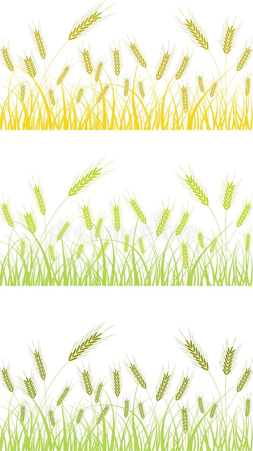 Field Of Wheat Vector Stock Images