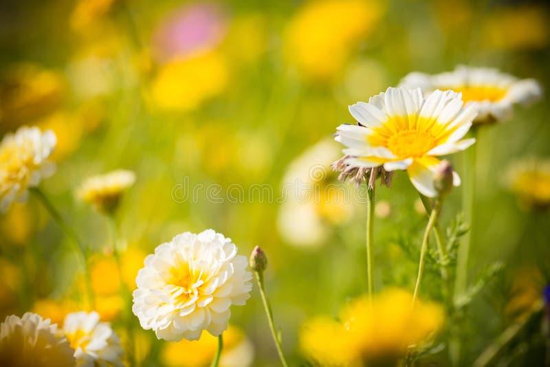 field wild blommor royaltyfria bilder