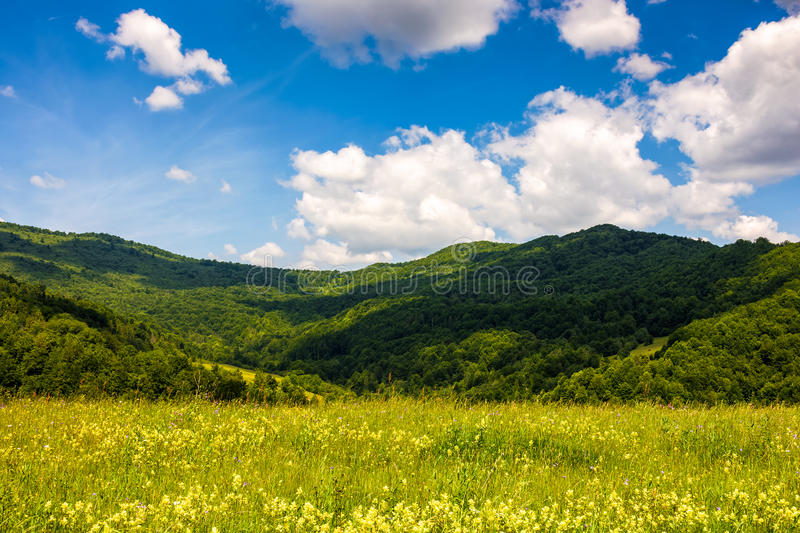 Field with wild herbs in summer mountain landscape stock photo