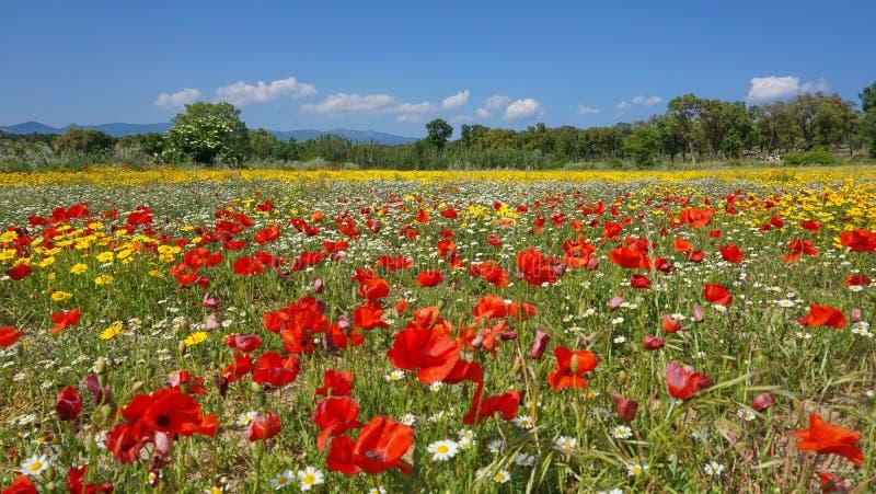 Field of wildflowers Spain Catalonia stock image
