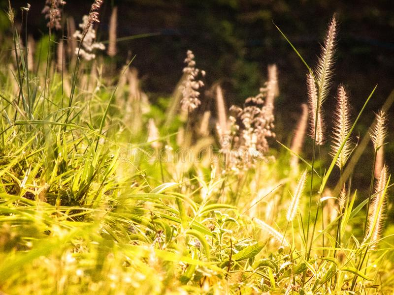 Field with wild grass wildflowers flowers during sunlight stock images