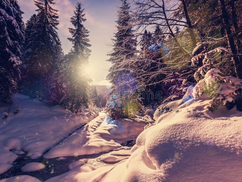 Чудесный зимний ландшафт Деревья леса горы зимы морозные под теплым солнечным светом живописный пейзаж природы стоковые изображения