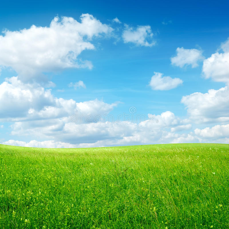 Free Field With Green Grass And Blue Sky Royalty Free Stock Image - 16986276