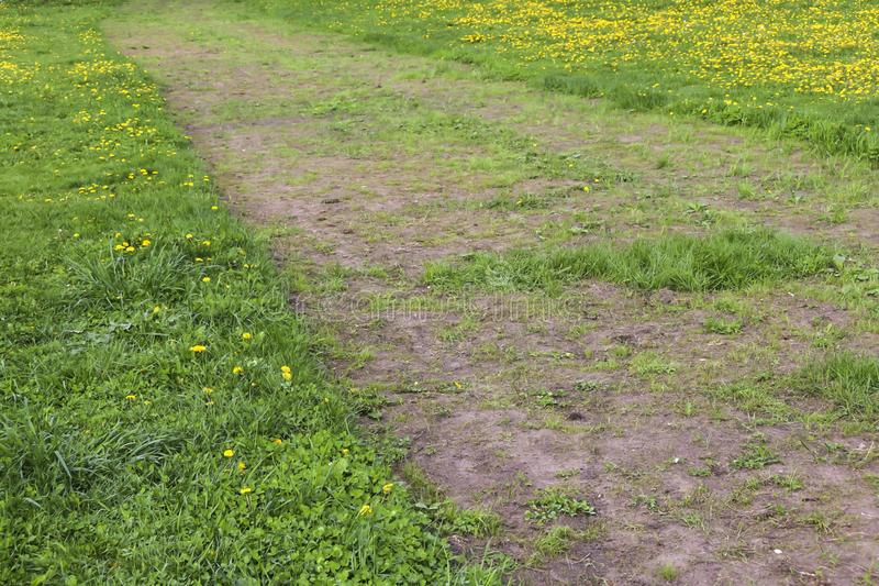 Field of yellow dandelions green meadow grass and road stock image