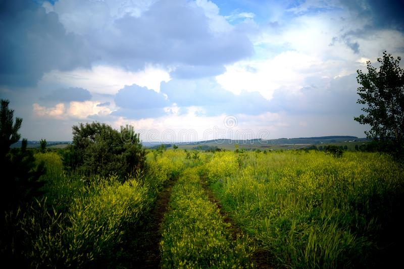 A field with yellow flowers under a heavy sky. stock image