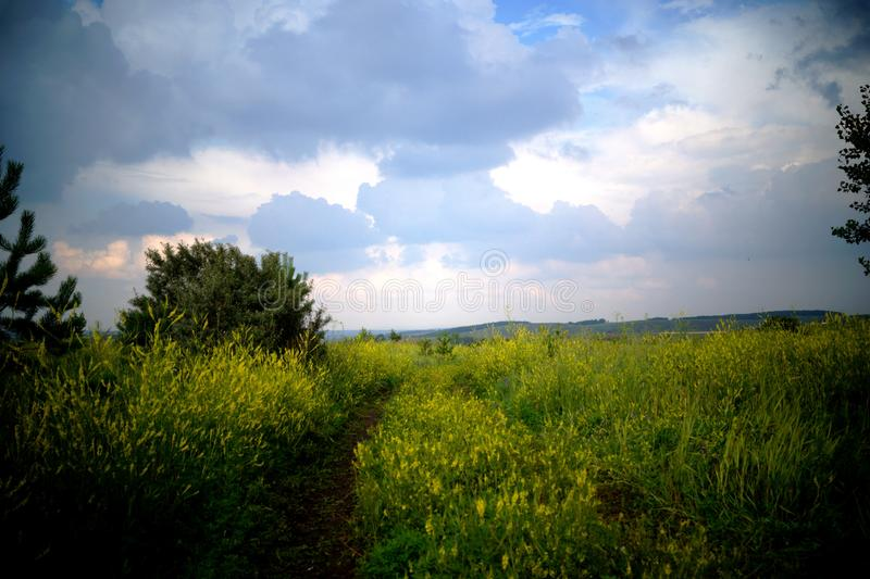 A field with yellow flowers under a heavy sky. stock photography