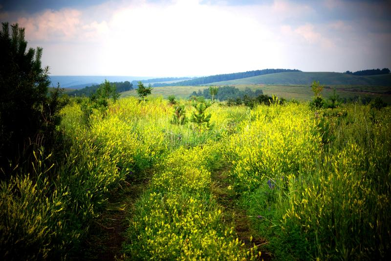 A field with yellow flowers under a heavy sky. stock images