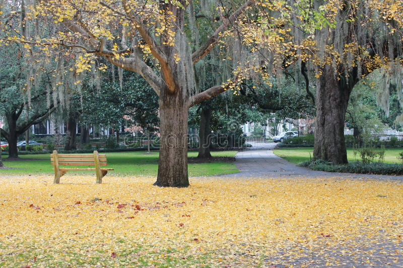 Field of yellow leaves and a park bench royalty free stock photos