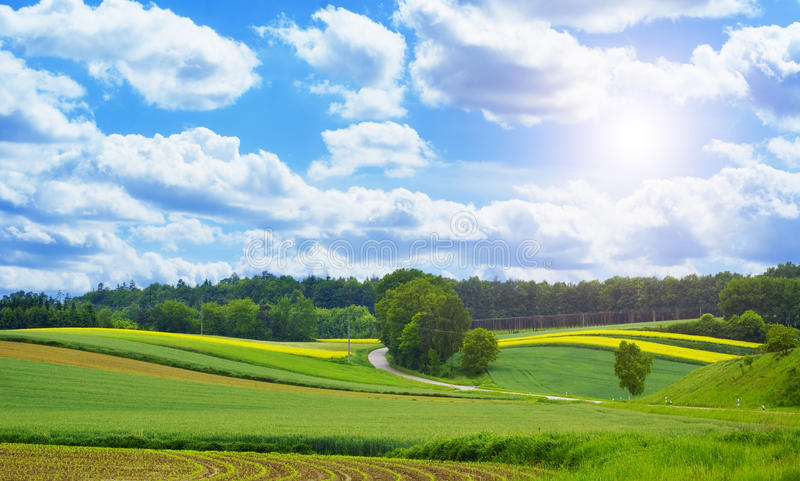Field of yellow seed stock photo