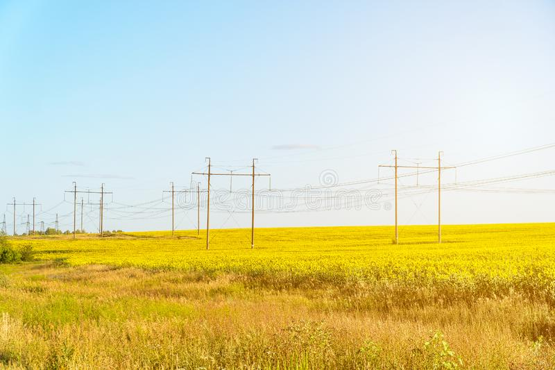 Field with yellow sunflowers and a high-voltage transmission electric line royalty free stock photos