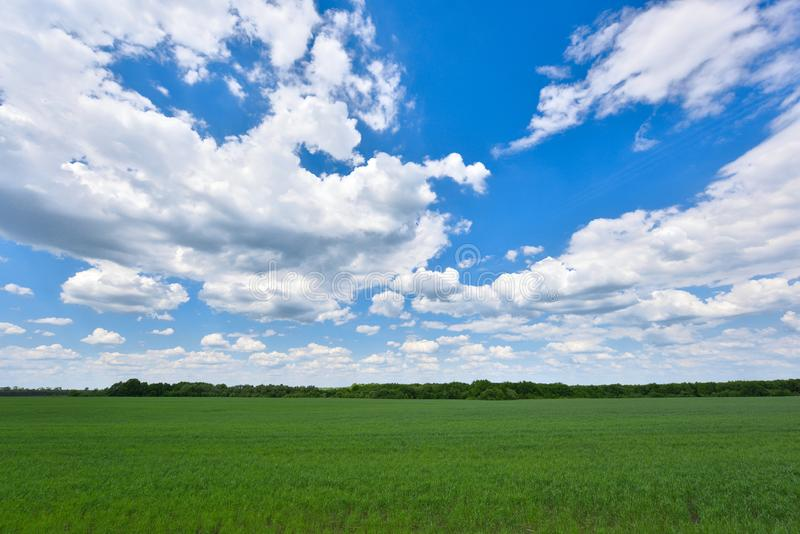 Field of young green wheat and blue sky with clouds.  stock image