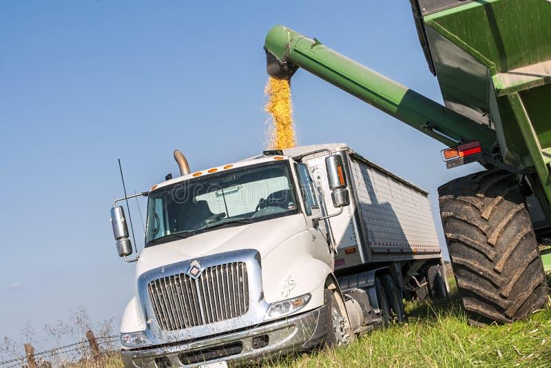 Fieldcorn harvest. A grain bin wagon unloading harvested corn into a trailer truck stock photos