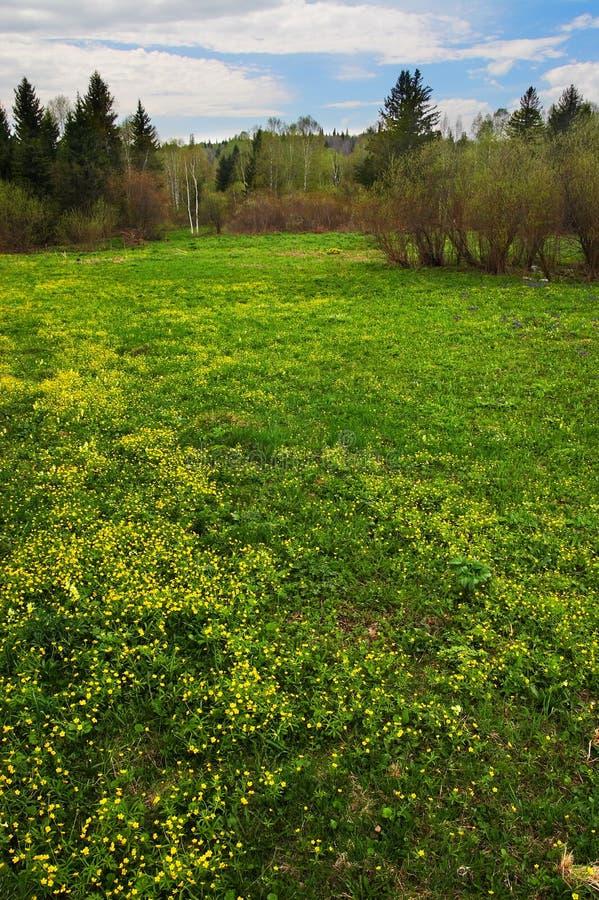 fields желтый цвет валов sibir стоковая фотография rf