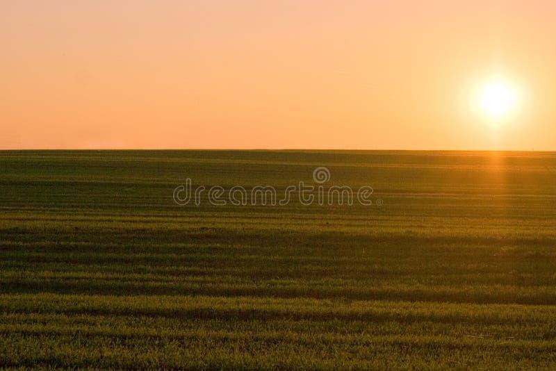 fields заход солнца стоковые изображения