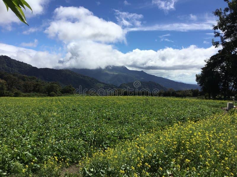 fields золото стоковые фото