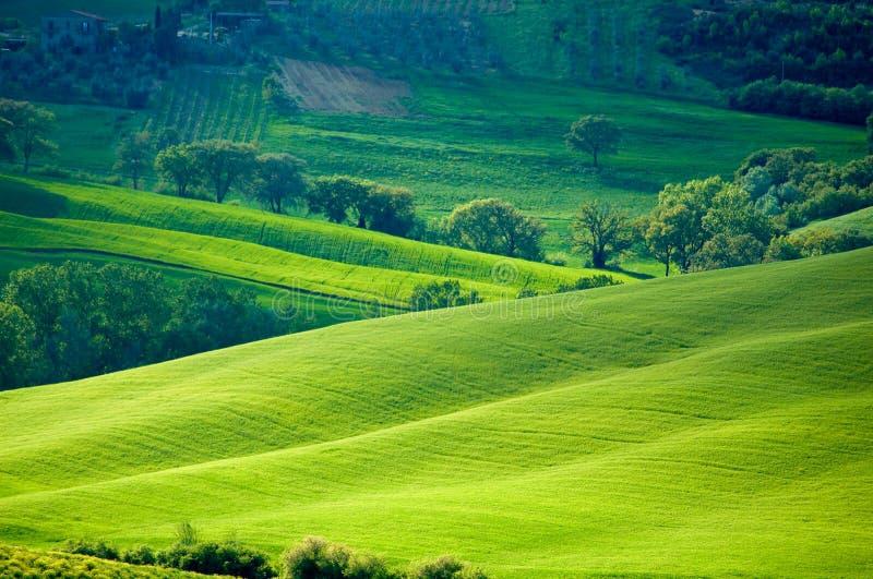 fields итальянское солнечное стоковое изображение rf