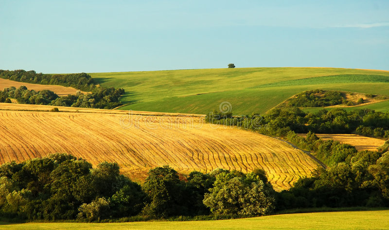 fields лето стоковые изображения rf