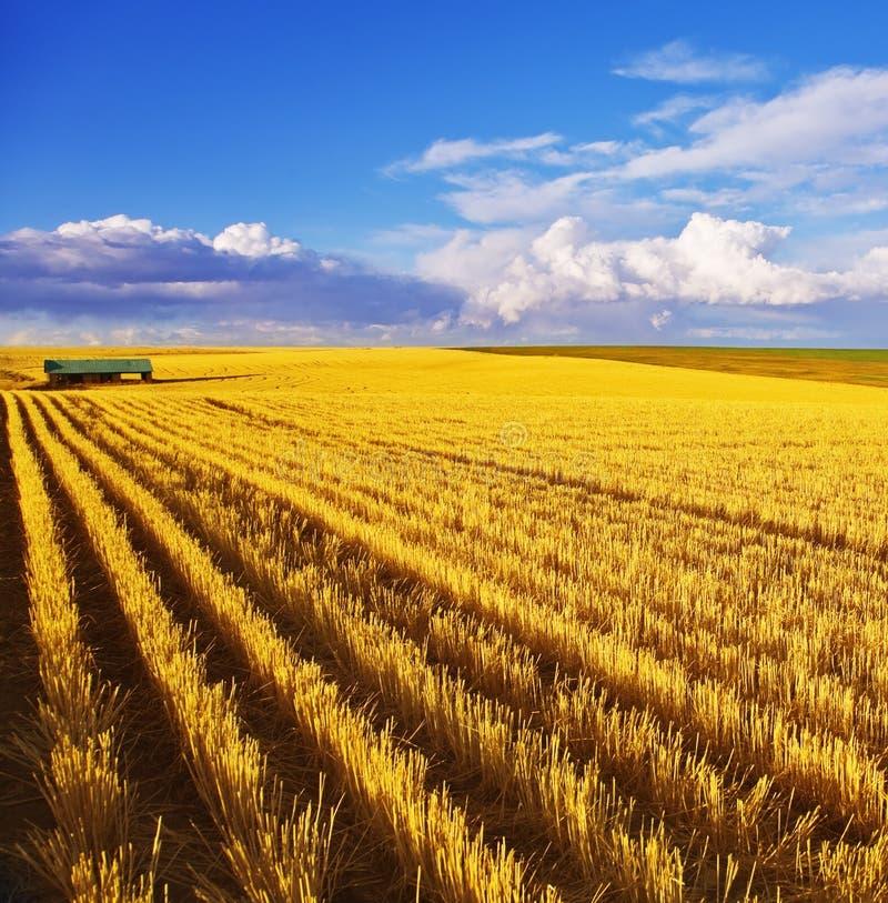 fields полдень Монтана стоковая фотография