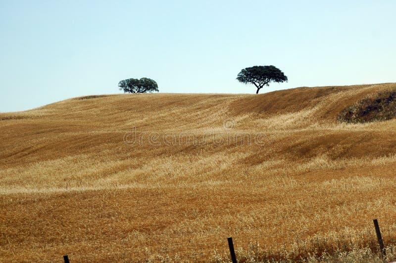fields португальское предложение стоковые изображения