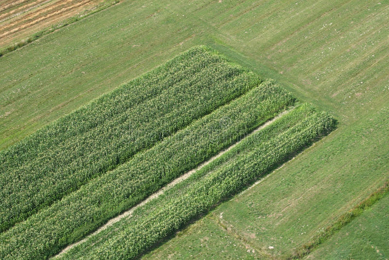fields лужки стоковое изображение rf