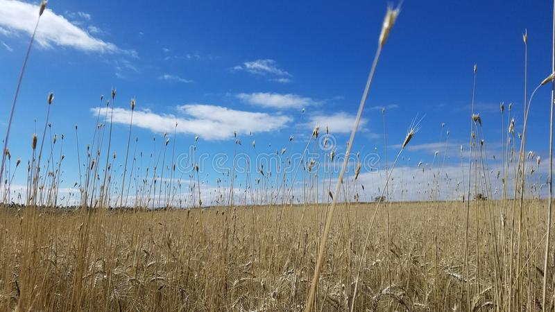 fields lizenzfreies stockbild
