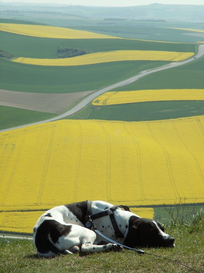 Free Fields Stock Image - 1465641