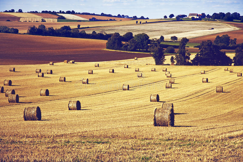 Download Fields stock photo. Image of graphics, bourgogne, france - 20990588