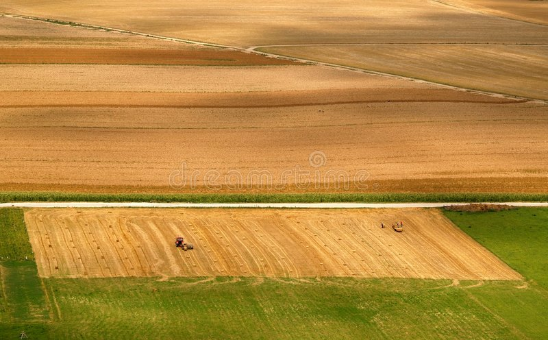 Fields. Durring summer in slovakia royalty free stock photo