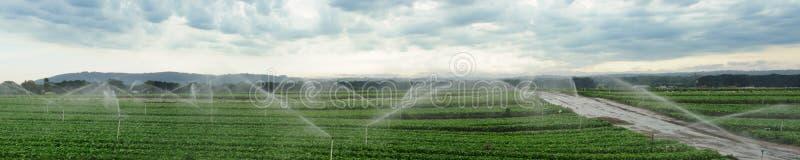 fields att bevattna för panorama royaltyfri fotografi