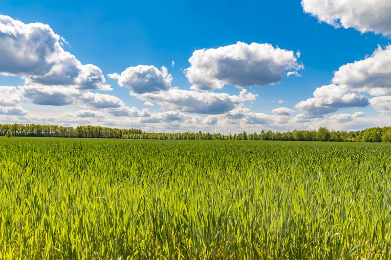 Fields at the city boundary between Berlin and Brandenburg, Germany. Over the landscape, white clouds can be seen in a blue. Fields at the city boundary between stock images