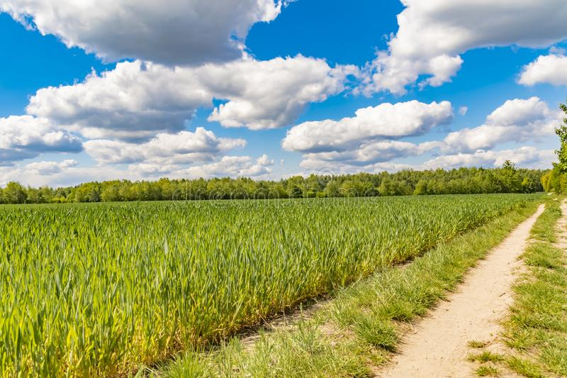 Fields at the city boundary between Berlin and Brandenburg, Germany. Over the landscape, white clouds can be seen in a bright blue. Sky. Between fields and royalty free stock photo