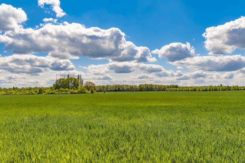 Fields at the city boundary between Berlin and Brandenburg, Germany. Over the landscape, white clouds can be seen in a bright blue sky stock photography