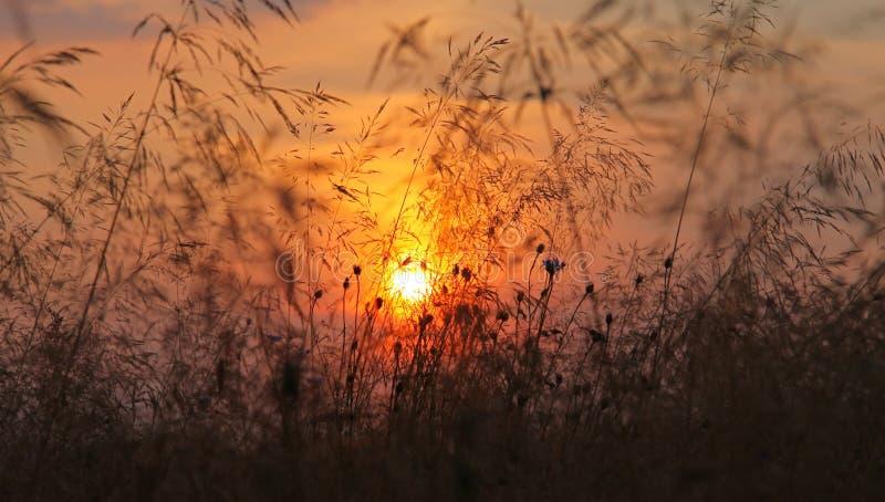 fields den sista solnedgången för guld royaltyfri fotografi