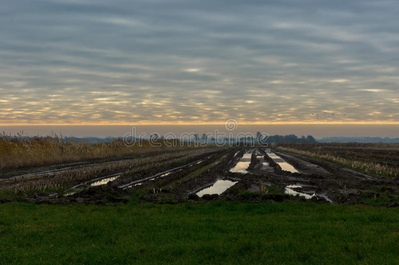 Fields in the evening. Left to dry because to wet to handle stock image