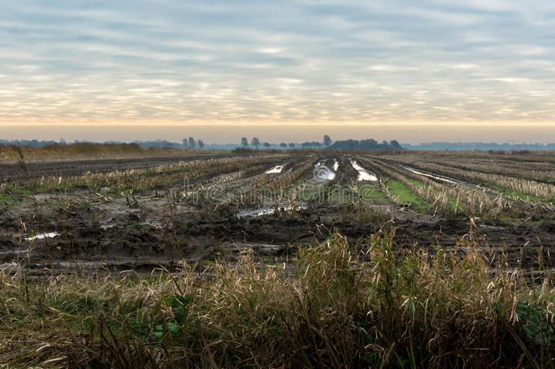 Fields in the evening. Left to dry because to wet to handle royalty free stock images