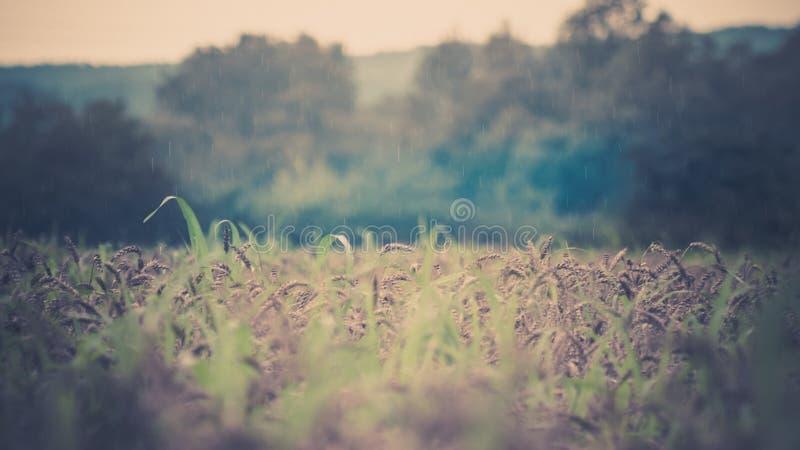 fields lizenzfreies stockfoto