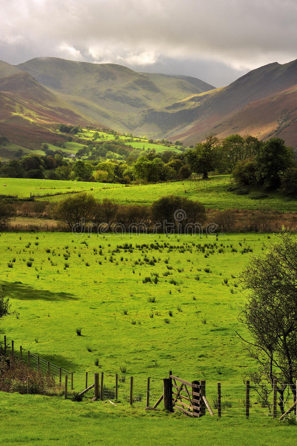 Download Fields And Fences, Lake District, Cumbria Stock Image - Image: 26161569