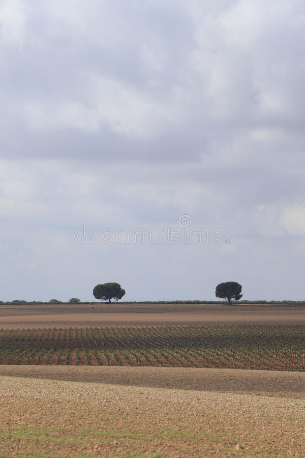 Fields. Field view in Albacete province, Castilla-La Mancha Comunity, Spain, Europe royalty free stock photography