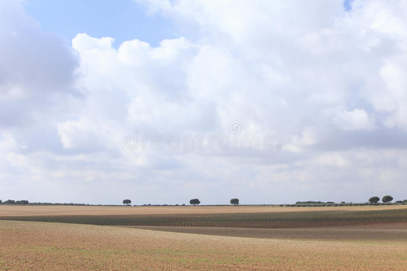 Fields. Field view in Albacete province, Castilla-La Mancha comunity, Spain, Europe stock photography