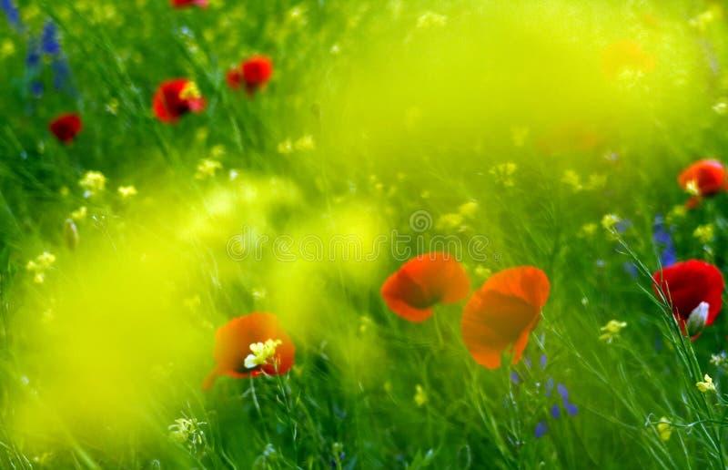 Fields of flower. Dreamy flower field stock photo
