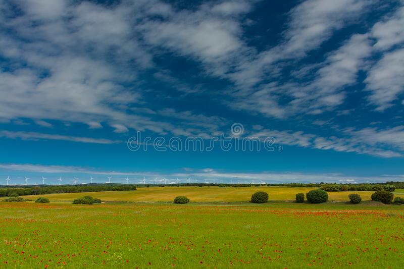 Fields with poppies and windmills royalty free stock photos