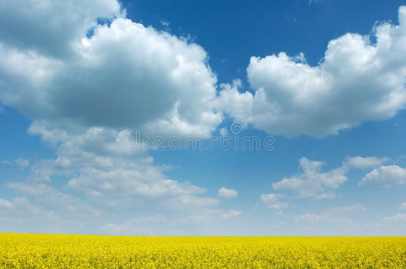 Fields Of Gold Free Stock Photos