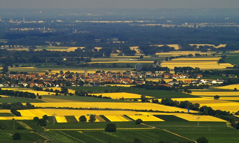 Fields of gold stock photography