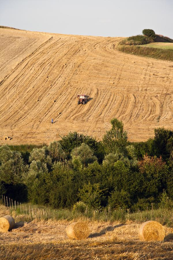 Download Fields grain stock image. Image of countryside, best - 15200197