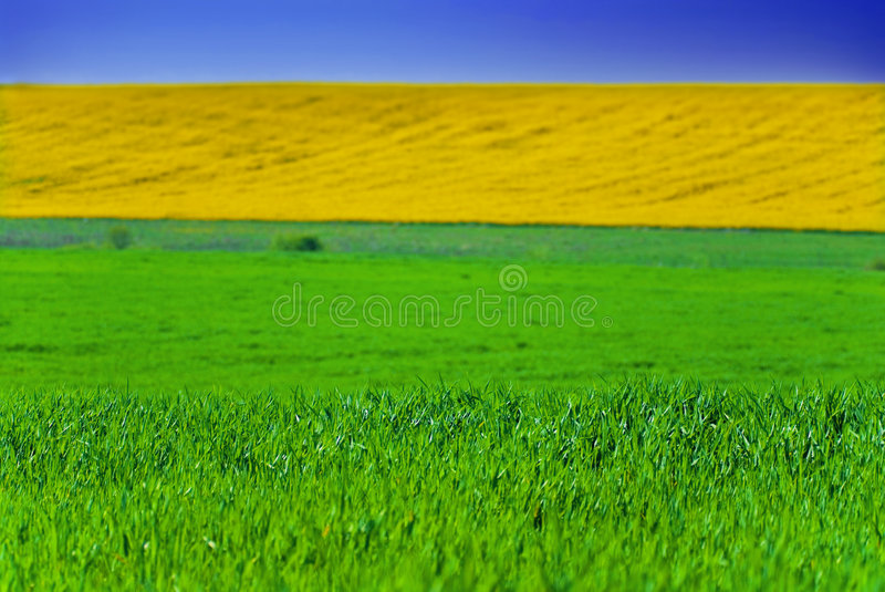 fields in green and yellow royalty free stock image