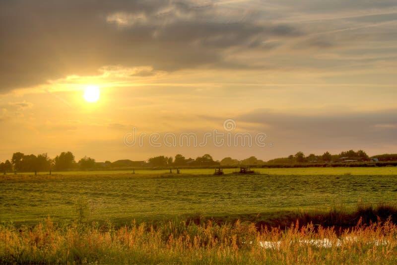 fields guld- royaltyfri fotografi